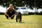 17 tips voor een puppyproof huis